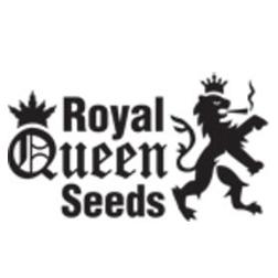 royal_queen_seeds
