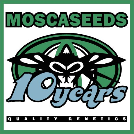MoscaSeeds