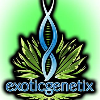 Exoticgenetix